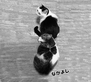 Cat-13(文字入り)