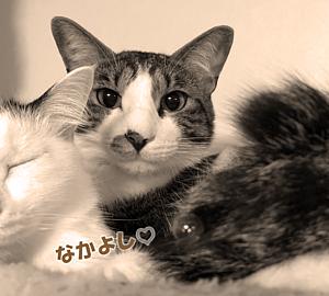 Cat-14(文字入り)