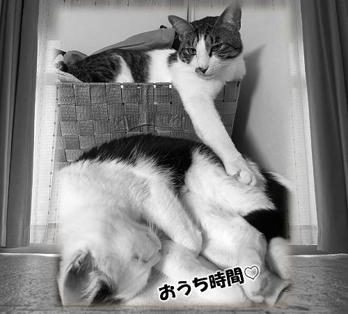 Cat-12(文字入り)