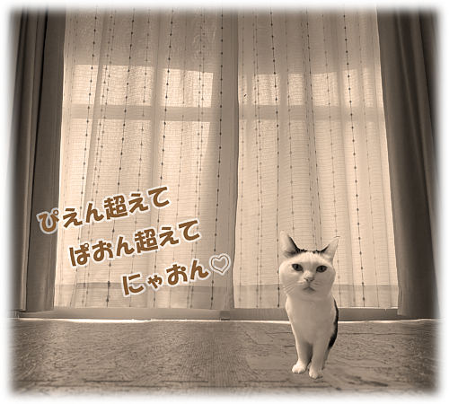 Cat-10(文字入り)