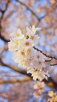 flower♥No.10