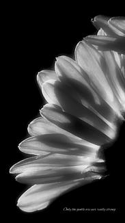 flower♥No.11