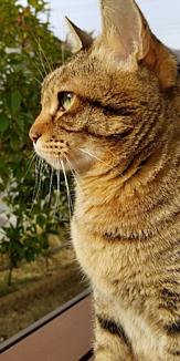 日差しを浴びるネコ
