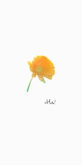 Hello! オレンジの花一輪