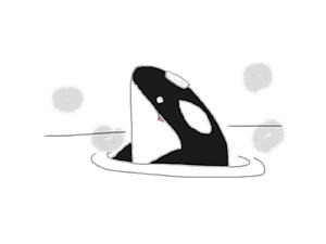 風呂シャチ