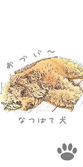 といぷーどる(なつばて犬)