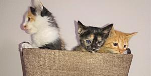 子猫さん兄弟