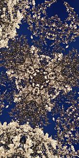 KALEIDOSCAPE Case(hana_arashi)