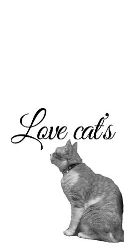 猫(横向き)