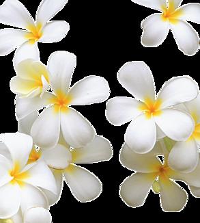 ハワイアンホワイトプルメリア手帳フレーム