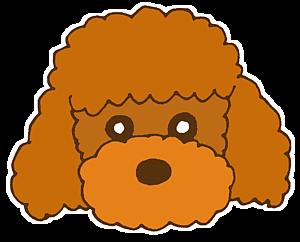犬のトイプードル