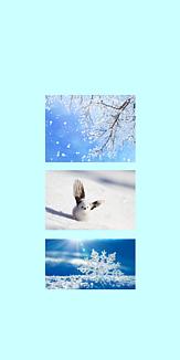 冬 ゆきとシマエナガと結晶