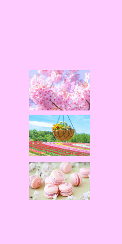 春 桜とチューリップとマカロン