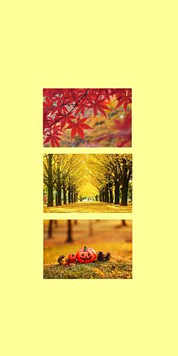 秋 もみじといちょうとかぼちゃ