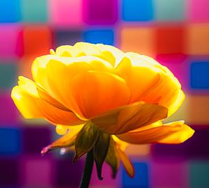 レトロポップなお花