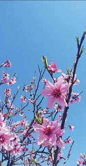 ワンコ王国にピンクの大きな花が咲きました