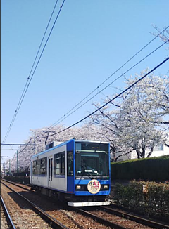 ワンコ王国親善大使よりワンコ王国の路面を走る桜の電車をご紹介