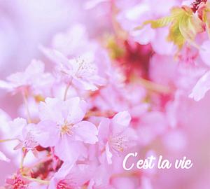 桜満開の手帳型スマホケース