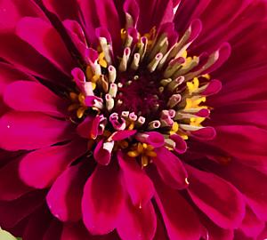 Happy flower.5