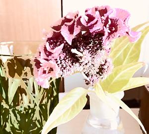 Happy flower.4