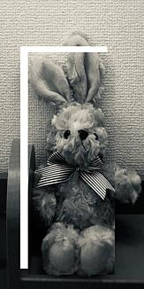 シックなウサギさん