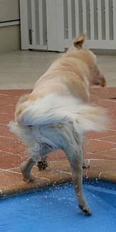 ブルブルな犬