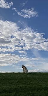 後ろ姿の犬と空
