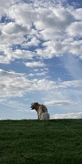 眩しい犬と空