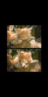 癒し猫 透明ver